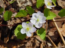 Små vita blommor i fullständig sommareftermiddag Fotografering för Bildbyråer