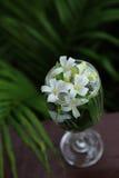 Små vita blommor, orange Jessamine, i den glass vasen arkivbild