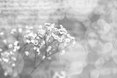 Små vita blommor på en abstrakt bakgrund Royaltyfri Fotografi