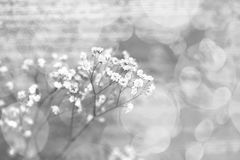 Små vita blommor på en abstrakt bakgrund valentin för dag s Arkivbilder