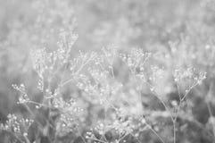 Små vita blommor på en naturlig bakgrund Härlig bakgrund closeup selektiv fokus Ð'lack och vitt fotografi royaltyfria foton