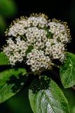 Små vita blommor på en solig dag Fotografering för Bildbyråer