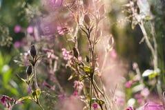 Små vita blommor på en suddig bakgrund Royaltyfri Foto