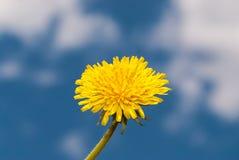 Små vita dekorativa blommor fotografering för bildbyråer