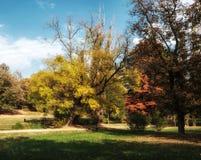 Småskog av träd i höst arkivfoto