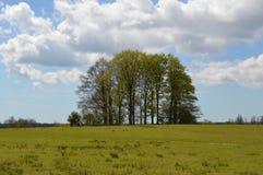 Småskog av träd i lantliga England Arkivfoton