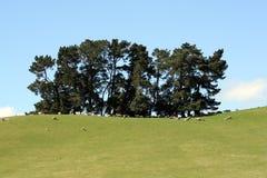 Småskog av trees Royaltyfria Bilder