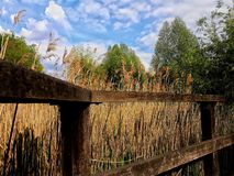 Småskog från staketet Fotografering för Bildbyråer