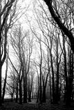 Småskog i mist - Skottland Royaltyfria Bilder