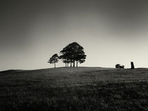 småskogtrees Royaltyfri Fotografi
