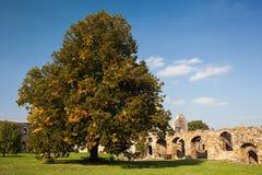 Småstad Gleichen - slotten fördärvar landskap i Tyskland Royaltyfria Bilder