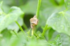 Smörfluga Royaltyfri Foto