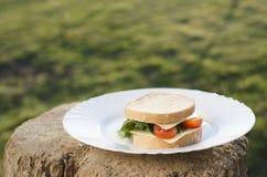 Smörgås på plattan och gräsplanbakgrunden royaltyfri foto
