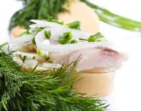 Smörgåsar av vitt bröd med sillen, lökar och örten Arkivbild