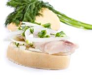 Smörgåsar av vitt bröd med sillen, lökar och örter Royaltyfri Fotografi