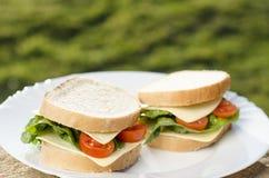 Smörgåsar på plattan och gräsplanbakgrunden royaltyfria bilder