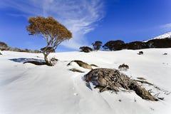 SM ρίζες λίθων δέντρων γόμμας χιονιού Στοκ εικόνα με δικαίωμα ελεύθερης χρήσης