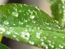 Sm? droppar av regnvatten p? gr?na sidor arkivfoto