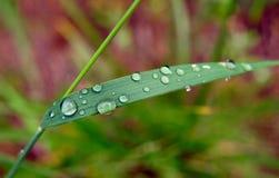 Små droppar för ett grässtrå och vatten Royaltyfria Foton