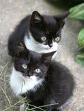 Små katter Arkivfoto