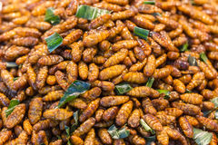 Smażący insektów mealworms dla przekąski Zdjęcie Stock