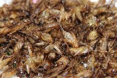 Smażący insekta pełny tło Obraz Stock