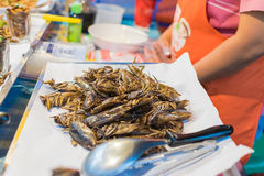 smażący insekty zdjęcie royalty free