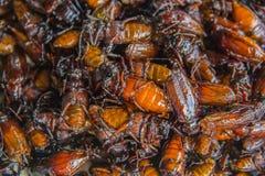 Smażący insekty w Thailand Fotografia Royalty Free