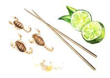 Smażący mały wapno i skorpiony Azjatycki jedzenie, odizolowywający na białym tle Odgórny widok Akwareli ręka rysująca ilustracja ilustracji
