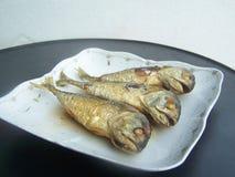 Smaży makreli jedzenie jest naglący Zdjęcia Royalty Free