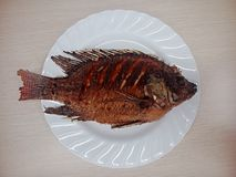 smażona ryba zdjęcie royalty free