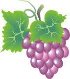 smaczne winogron Obraz Royalty Free
