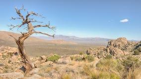 Smagliatura dell'albero, traccia del picco di Teutonia, prerogativa nazionale del Mojave, CA fotografie stock