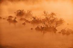 Smagliature nell'acqua di fiume nella mattina in anticipo di inverno Fotografie Stock