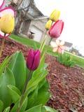 Smak wiosna obrazy stock