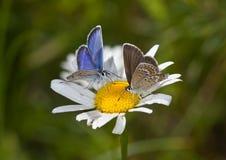 Smakelijke bloem Royalty-vrije Stock Afbeeldingen