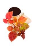 Smakelijke drank en rode bladeren Stock Afbeelding