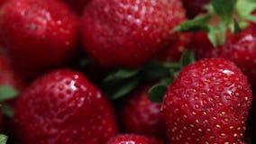 Smakelijke en mooie rode aardbeien Verse aardbeien Aardbei op rode achtergrond Beste rode aardbeitextuur stock video