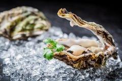 Smakelijke oester in shell Stock Afbeeldingen
