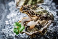 Smakelijke oester in shell op ijs Royalty-vrije Stock Foto's
