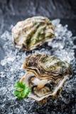 Smakelijke oester in shell op verpletterd ijs Royalty-vrije Stock Afbeelding
