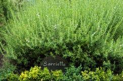 Smakelijke struik in een Franse tuin Stock Foto