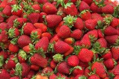 smaklig röd mogen jordgubbe Fotografering för Bildbyråer