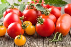 Smakliga olika tomater Royaltyfri Fotografi