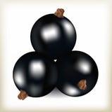 Smakligt bär för svart vinbär, lögn för tre frukter en pyramid, naturlig ny mat, frukter av en vinbärbuske, mat med svartrundabär Arkivfoton