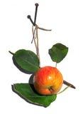 smakligt äpple Arkivbild