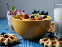 Smakowici cornflakes z malinkami i czarnymi jagodami na błękitnym tle Opłatki i mleko Wielki początek dzień zdjęcie royalty free
