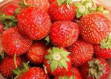 Smakowite i dojrzałe jagodowe truskawki Fotografia Stock