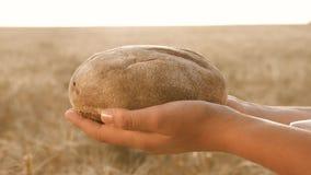 Smakowity bochenek chleb na palmach chleb w rękach dziewczyny nad pszenicznym polem świeży żyto chleb nad Dojrzałymi ucho zbiory