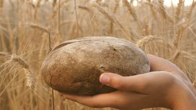 Smakowity bochenek chleb na palmach chleb w rękach dziewczyny nad pszenicznym polem świeży żyto chleb nad Dojrzałymi ucho zdjęcie wideo